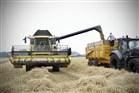 Een veld met tarwe, graan wordt door een combine geoogst