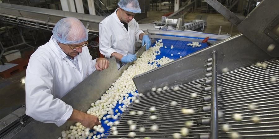 foto levensmiddeleninduistrie verwerking zilveruitjes
