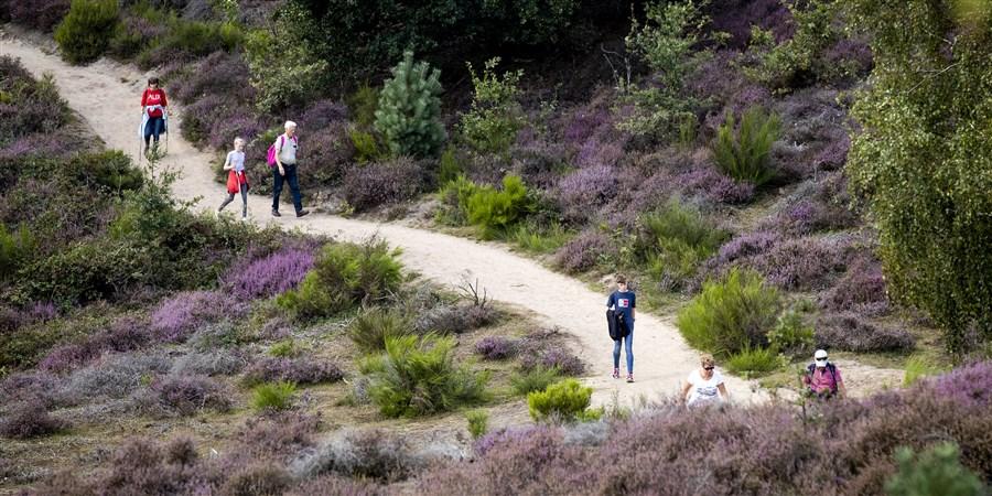 Wandelaars in heidegebied met jonge groene aanplant