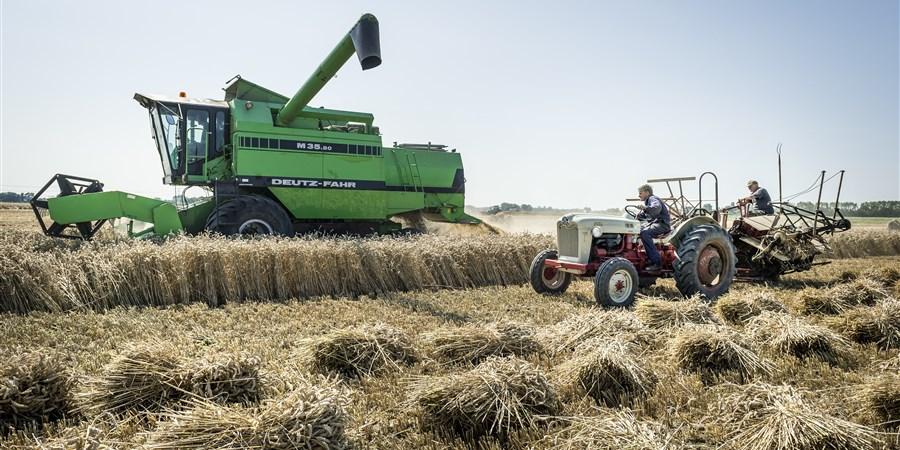 Boeren oogsten tarwe