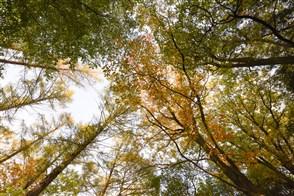 Bomen in het Twentse landschap