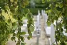 Doorzicht kerkhof vanuit overhangende takken
