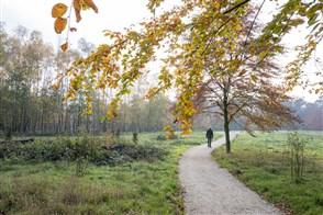 Natuurbegraafplaats. Heumense schans in herfst. In de verte loopt een man.