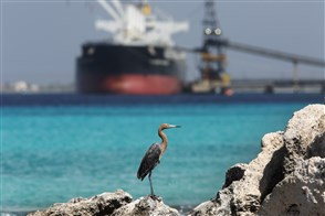 Red egret in front of a freightship being loaded