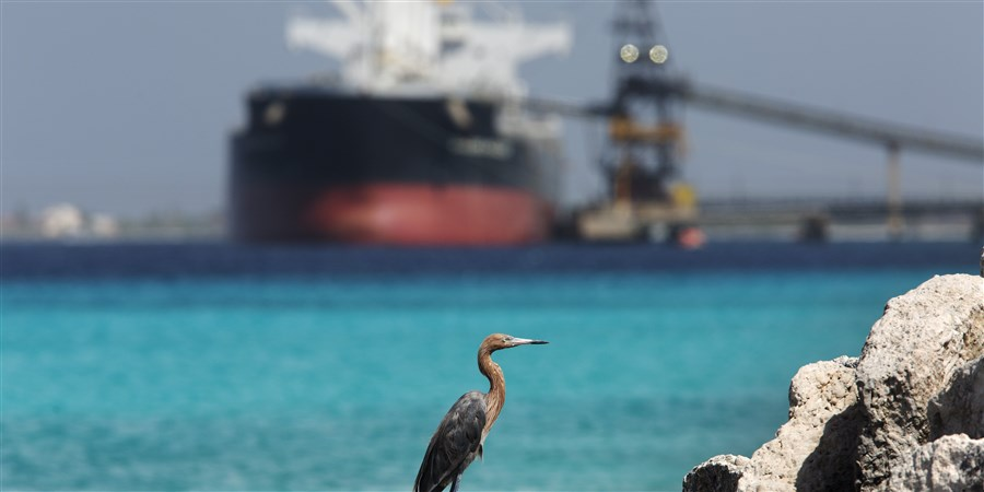 Rode reiger tegen een achtergrond van een vrachtschip dat aan het laden is