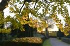 Bomen in herfst, vallen van blad, bladeren