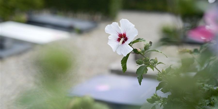 Bloem bloeit op een begraafplaats