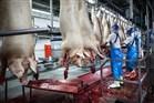Varkensslachterij in Boxtel