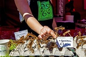 Sprinkhanen eten op foodfestival naast de Markthal in Rotterdam