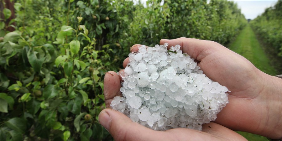 Fruitteelt geteisterd door hagel