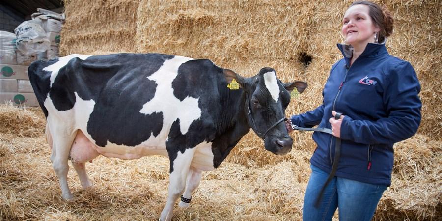 Boerin met koe